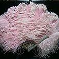 Abalone feathers 1